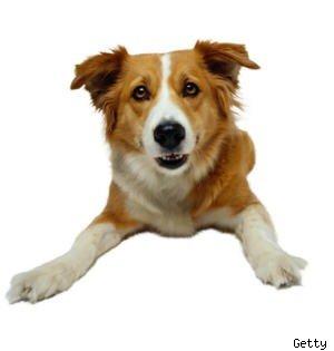 Выдвижение собаки в губернаторы Техаса спасает жизни бездомным животным