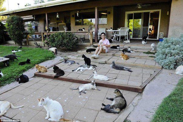 Калифорнийский кошкин дом и кошачья